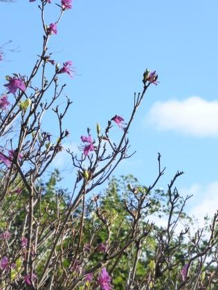 sky nad blooms